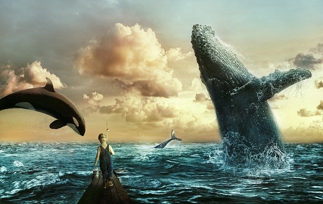 moře velryby chlapec