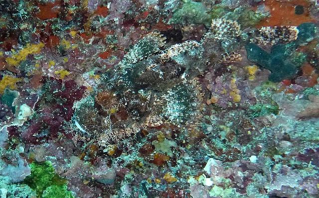 kamenná ryba