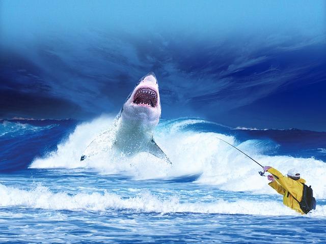 lov žraloka
