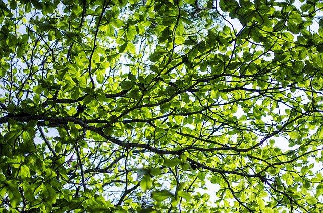 zeleň stromu